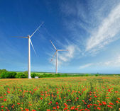 Windmills and poppies — Stock Photo