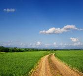 Landweg via een groen veld — Stockfoto