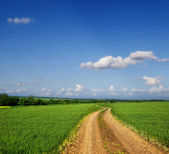 緑のフィールドを介して国の道路 — ストック写真