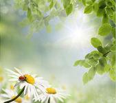 Ladybug and daisy — Стоковое фото