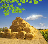 Haystack and sunflowers — Stock Photo