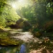 Fairy Tale Forest — Stock Photo