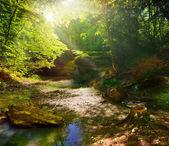 Forêt de conte de fées — Photo