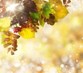 Natural outdoors bokeh in golden autumn tones — Stock Photo