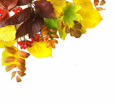 Corner Border of colored falling leafs on white background — Stock Photo