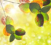 Natural outdoors bokeh in golden autumn tones — Stock fotografie