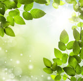Spring or summer abstract background with bokeh lights. — Stock Photo