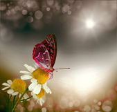 Butterfly and daisy field — Stock Photo