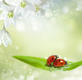 Family of ladybugs at the time of reproduction — Stock Photo