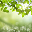 Natural green background with selective focus — Foto de Stock