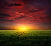 Young wheat field at sunset — Stock Photo