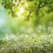 Natural green background with selective focus — Stock Photo