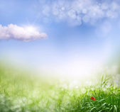 Abstract spring background — Stock Photo