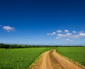 Country road through a green field — Stock Photo