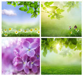 Spring backgrounds — Stock Photo