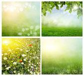 Fondos de primavera — Foto de Stock