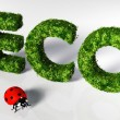 Ladybirds with eco text — Stock Photo