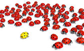 Yellow ladybird is marginalized — Stock Photo