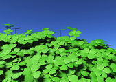 Group of four-leaf clovers — Stock Photo
