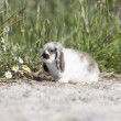 Bunny — Stock Photo