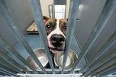 Animal shelter — Stock Photo