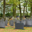 Cemetery — Stock Photo #14531815