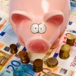 Saving pig — Foto Stock