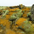 Stock Photo: Moss on rocks