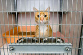 Animal shelter — Foto Stock