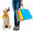 Shopping with dog - Stock Photo
