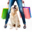 Shopping with dog — Stockfoto