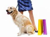 Shopping with dog — Stock Photo