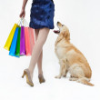 Shopping with dog — Foto de Stock