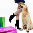 Shopping with dog — Stock Photo #24552933