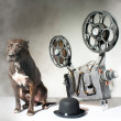 Stock Photo: Dog and cinema