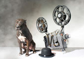 Dog and cinema — Stock Photo