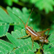 Stock Photo: Grasshopper on grass.