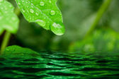 Water drops on the leaves. — Stock Photo