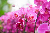 Violet Orchid flowers — Stock Photo