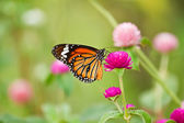 Butterfly on a flower. — Photo