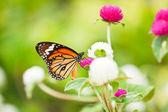 Vlinder aan een bloem. — Stockfoto