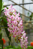 Orchid growing on tree — Foto Stock