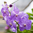 Purple orchid. - Stock Photo