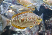 Photo of a tropical Fish — Stockfoto