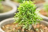 Small tree — Stock Photo