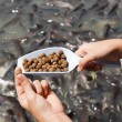 Pellet fish food. — Stock Photo