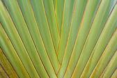 Leaf of Palm Tree — Stock Photo