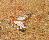 Schmetterling in pang sida nationalpark thailand — Stockfoto