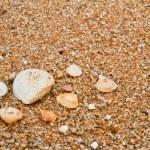 Sea shells on sandy beach. — Stock Photo