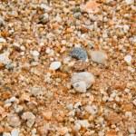 Sea shells on sandy beach. — Stock Photo #33796355